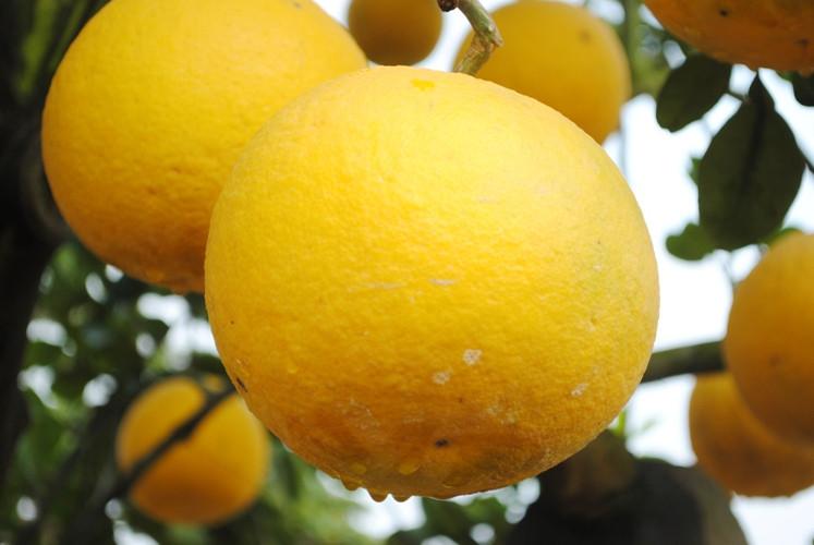 5 loại trái cây chúng ta nên ăn để tốt cho sức khỏe